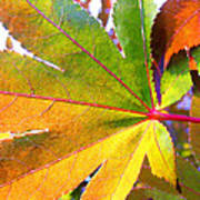 Japanese Maple Leaves 7 In The Fall Poster
