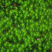 Japanese Moss Poster