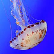 Jellyfish 4 Poster