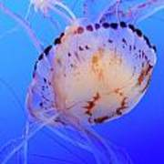 Jellyfish 5 Poster
