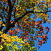 Jewels Of Autumn Poster