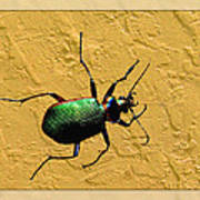 Jeweltone Beetle Poster