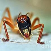 Jiminy Cricket Poster