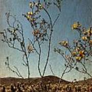 Joshua Tree Park In Bloom Poster