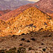 Joshua Tree Sunrise Panorama Poster