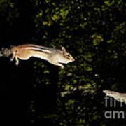 Jumping Chipmunk Poster