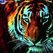 Jungle Cat Poster