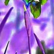 Jungle Iris Poster