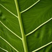 Jungle Leaf Poster