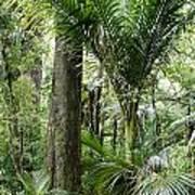 Jungle Poster