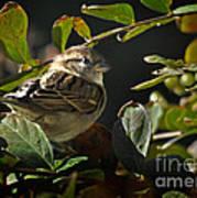 Junior Sparrow Poster