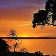 Kangaroo Island - Sunrise Poster by David Barringhaus