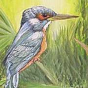 Kingfisher Poster by Debra Piro