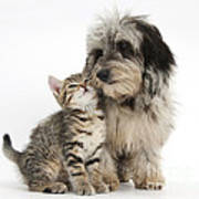 Kitten And Daxie-doodle Puppy Poster