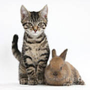 Kitten And Rabbit Poster