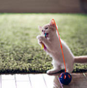 Kitten Catches Feather Toy Poster