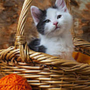 Kitten In Basket With Orange Yarn Poster