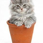 Kitten In Pot Poster