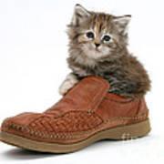 Kitten In Shoe Poster