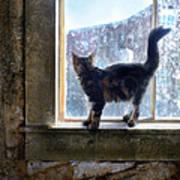 Kitten On Windowsill Of Abandoned House Poster