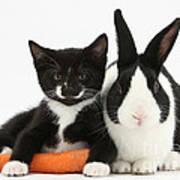 Kitten, Rabbit And Carrot Poster