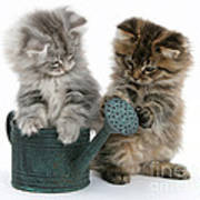 Kittens And Watering Can Poster