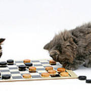 Kittens Playing Checkers Poster