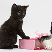 Kittens Playing With Birthday Gift Bag Poster