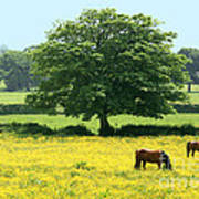 Knee High In Buttercups Poster