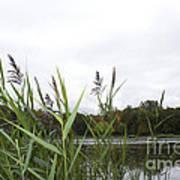 Lac Des Castors Poster