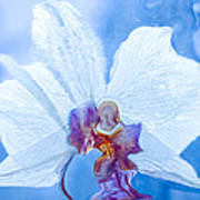 Lady Orchid The Sky Beckons Poster