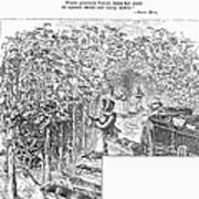 Lake Erie: Vineyard, 1873 Poster