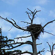Lake Tahoe Eagle Nest Poster