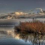 Lake With Pampas Grass Poster