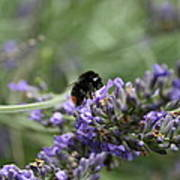 Landing Bee Poster
