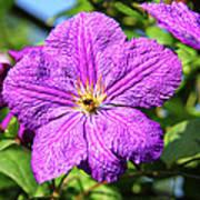 Last Summer Bloom Poster