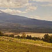Lavender Farm Panorama Poster