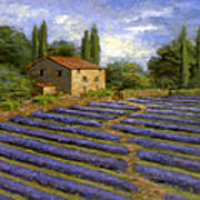 Lavender Fields In The Sun Poster