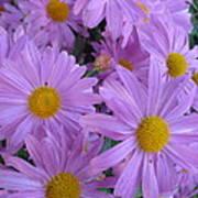 Lavender Mum Bouquets Poster