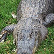 Lazy Gator II Poster