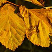 Leaf 3 Poster