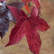 Leaf In Red Poster