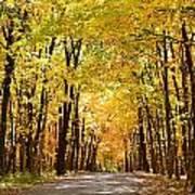 Leaf Lit Path Poster