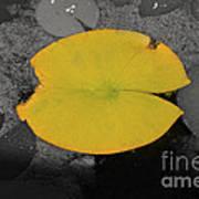 Leaf On A Pond II Poster