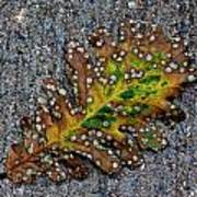 Leaf On The Sidewalk Poster by Robert Ullmann