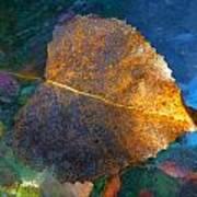 Leaf Portrait 5 Poster