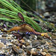 Leafy Dragon Seahorse - 0001 Poster