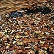 Leaves Floating On River Water Poster