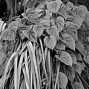 Leaves In B W Poster