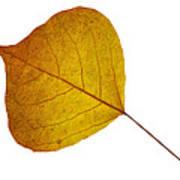 Leaves Ten  Poster